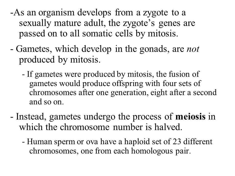 - Gametes, which develop in the gonads, are not produced by mitosis.