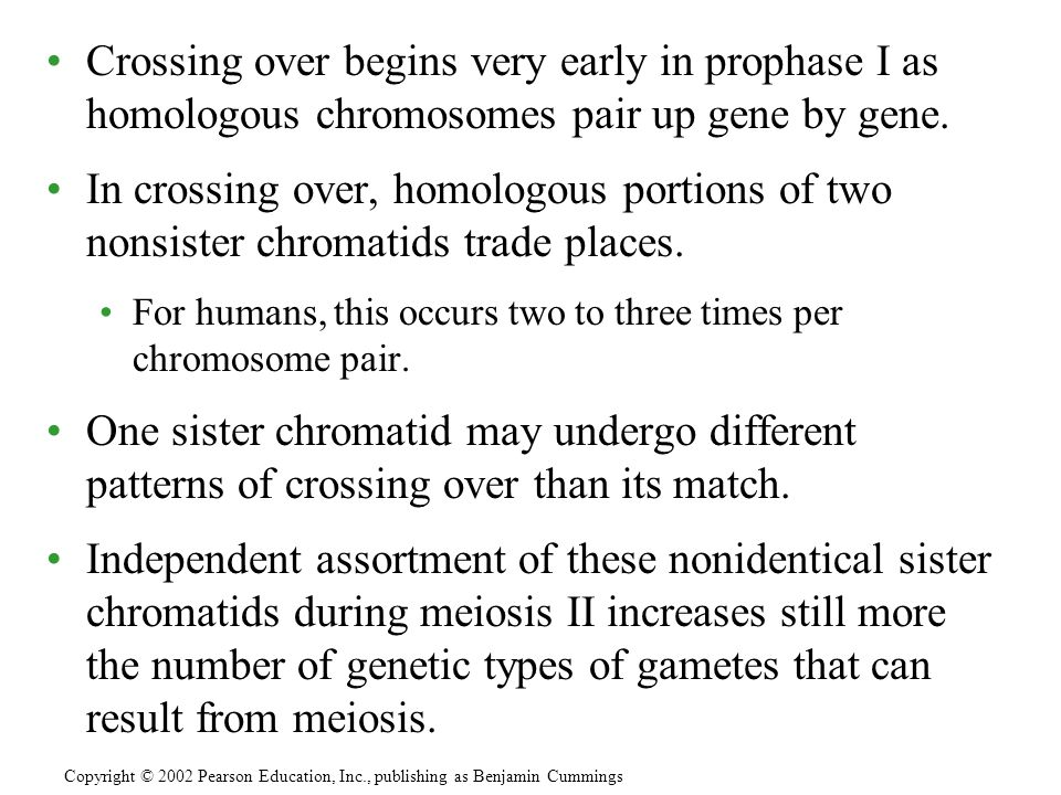 Crossing over begins very early in prophase I as homologous chromosomes pair up gene by gene.