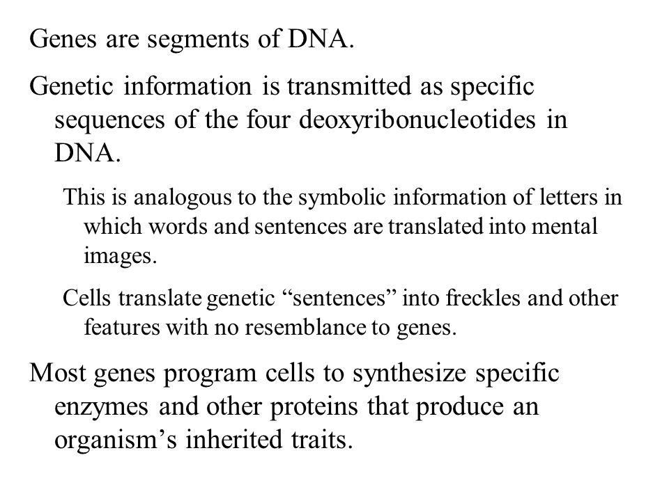 Genes are segments of DNA.