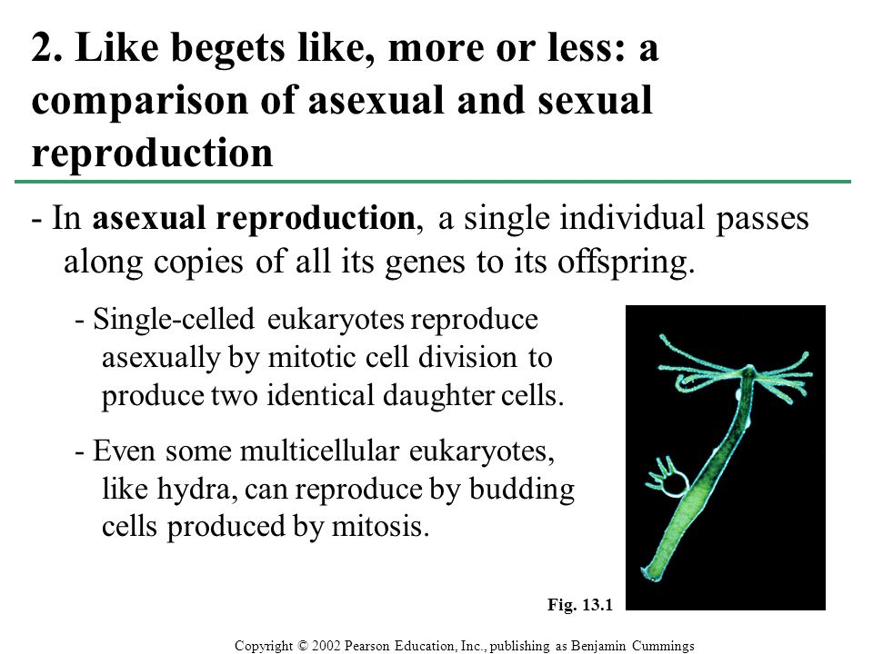 2. Like begets like, more or less: a comparison of asexual and sexual reproduction