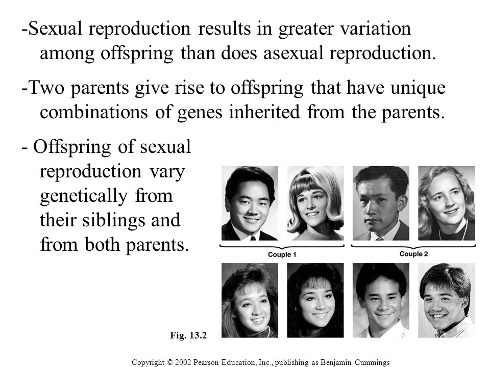-Sexual reproduction results in greater variation among offspring than does asexual reproduction.