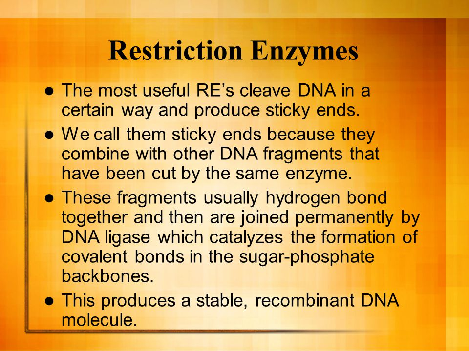 Restriction Enzymes The most useful RE's cleave DNA in a certain way and produce sticky ends.