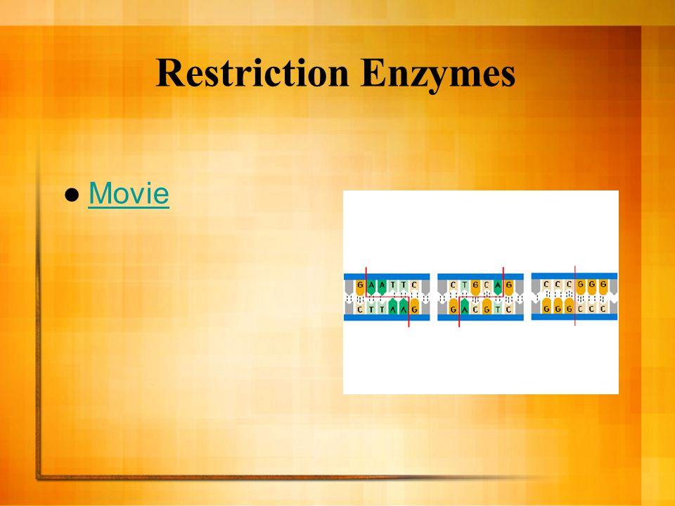 Restriction Enzymes Movie
