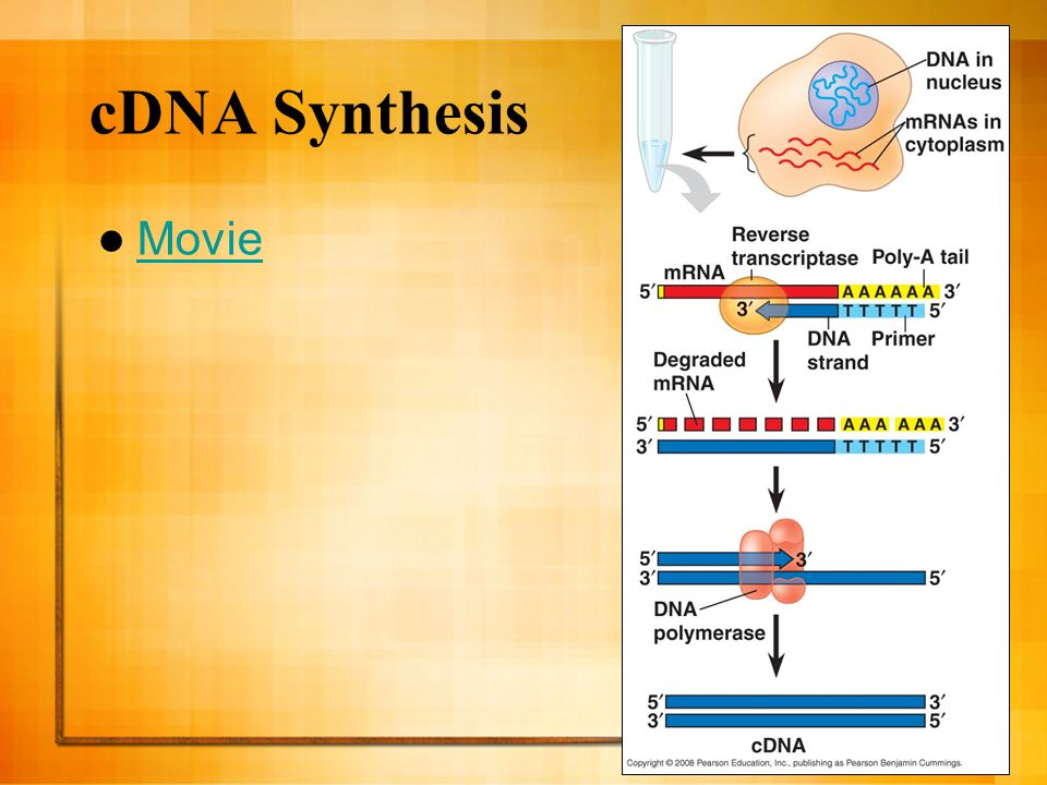 cDNA Synthesis Movie 25