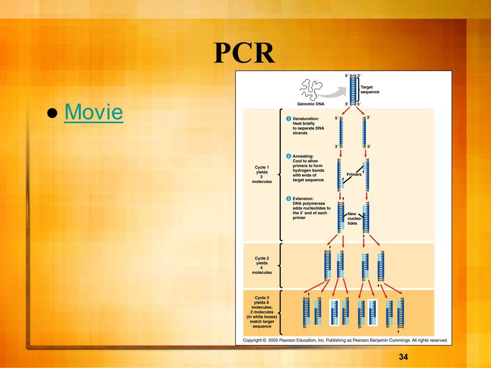 PCR Movie 34