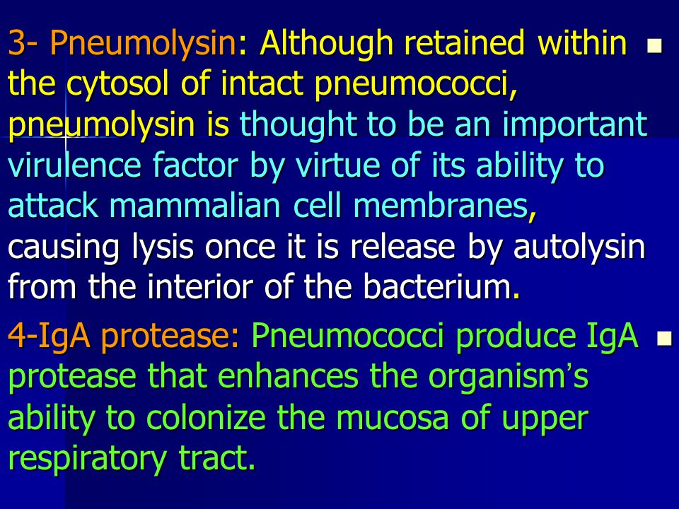 3- Pneumolysin: Although retained within the cytosol of intact pneumococci, pneumolysin is thought to be an important virulence factor by virtue of its ability to attack mammalian cell membranes, causing lysis once it is release by autolysin from the interior of the bacterium.