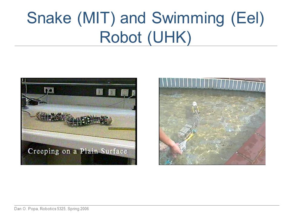 Snake (MIT) and Swimming (Eel) Robot (UHK)