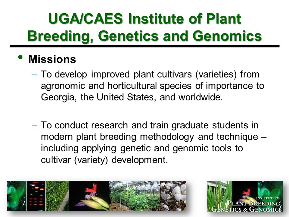 UGA/CAES Institute of Plant Breeding, Genetics and Genomics