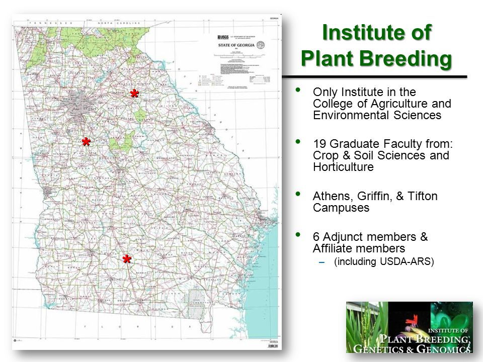Institute of Plant Breeding