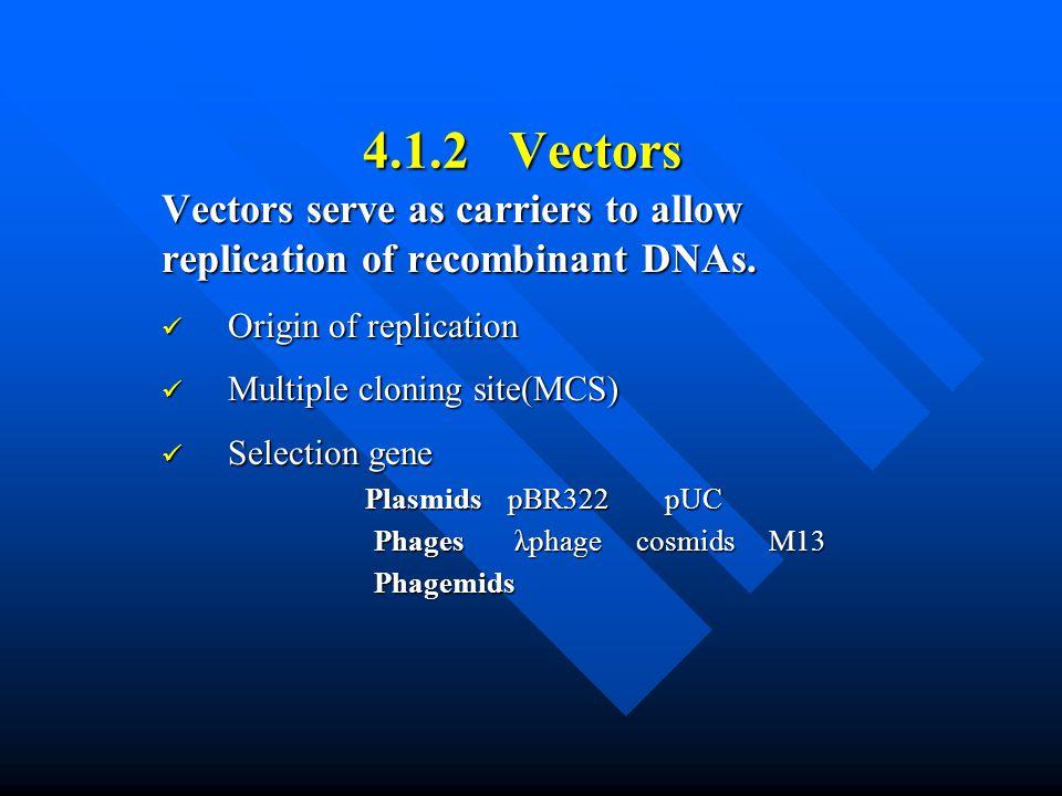 4.1.2 Vectors Vectors serve as carriers to allow replication of recombinant DNAs. Origin of replication.