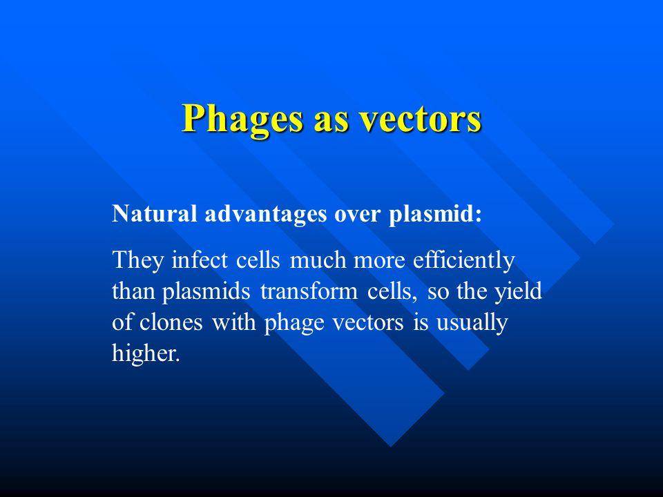 Phages as vectors Natural advantages over plasmid: