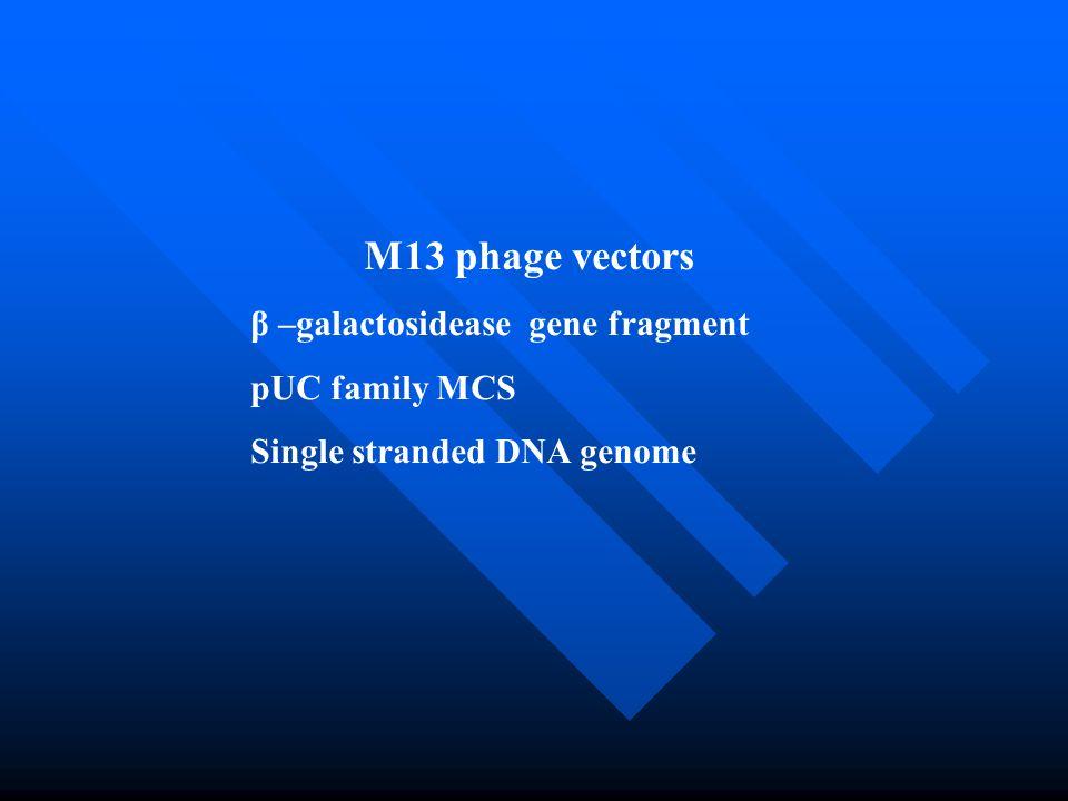 M13 phage vectors β –galactosidease gene fragment pUC family MCS