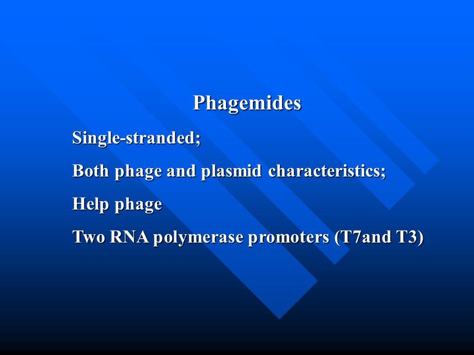 Phagemides Single-stranded; Both phage and plasmid characteristics;