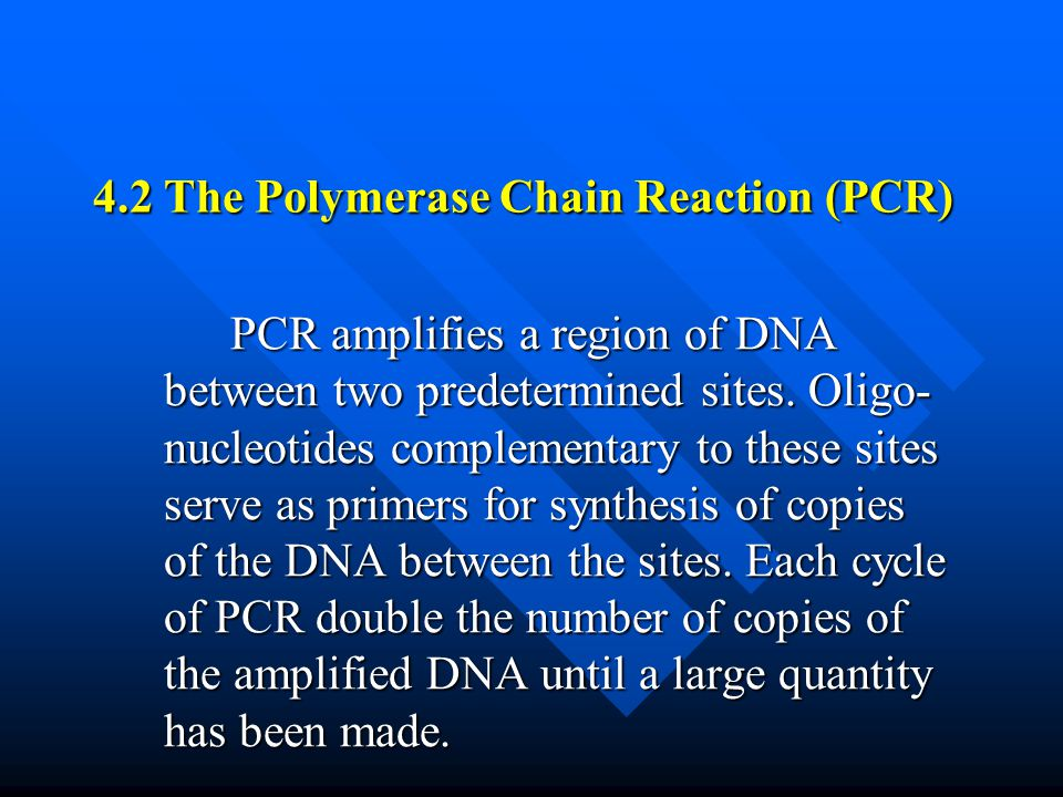 4.2 The Polymerase Chain Reaction (PCR)