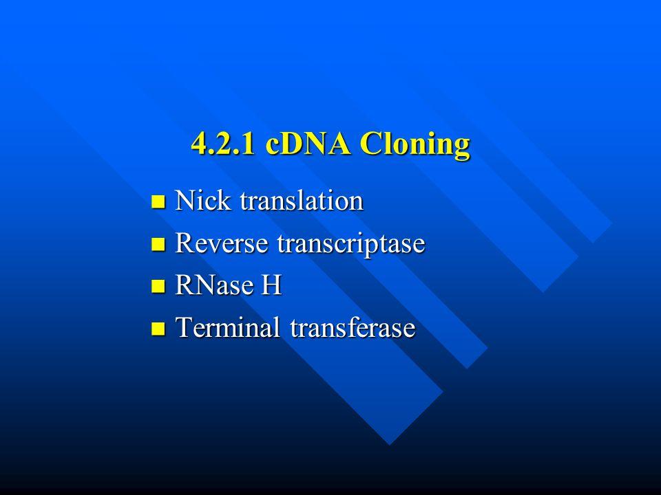 4.2.1 cDNA Cloning Nick translation Reverse transcriptase RNase H