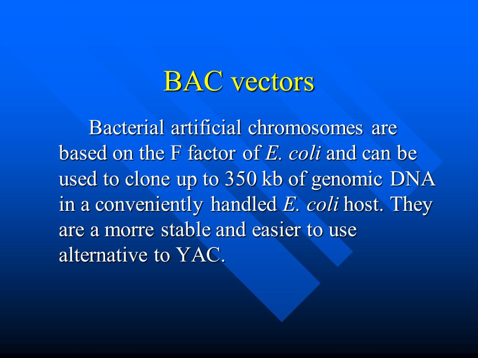 BAC vectors
