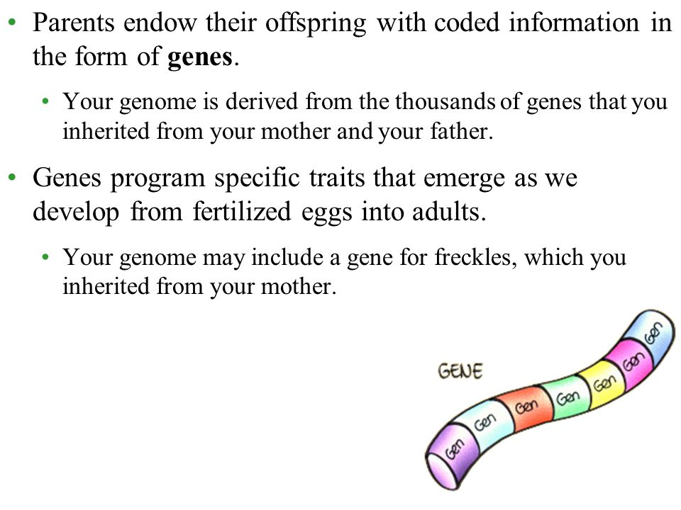 Parents endow their offspring with coded information in the form of genes.