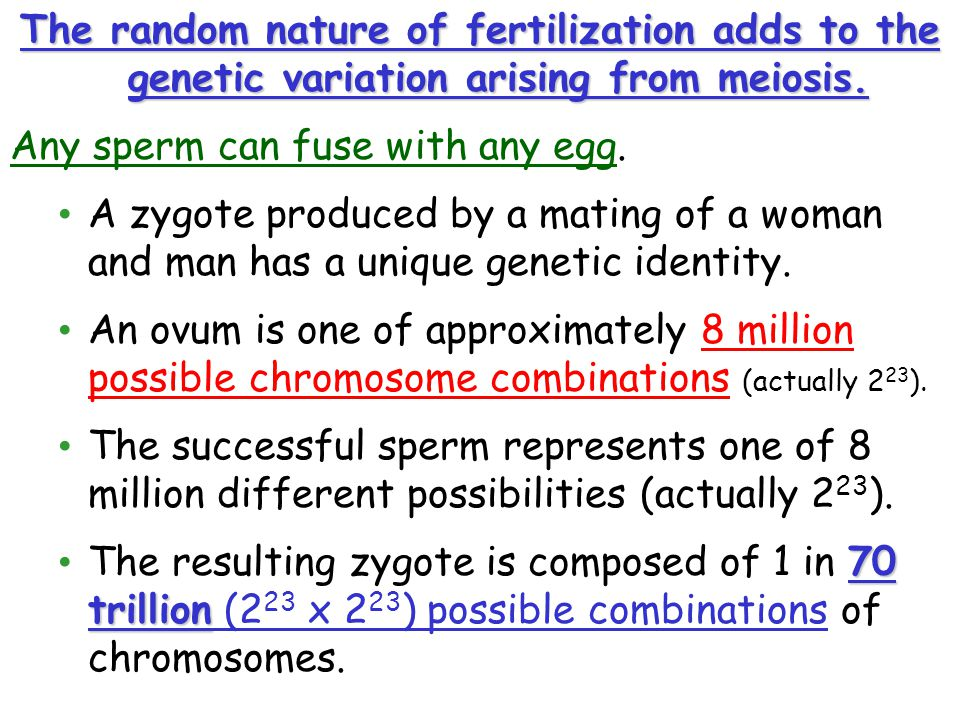 The random nature of fertilization adds to the genetic variation arising from meiosis.