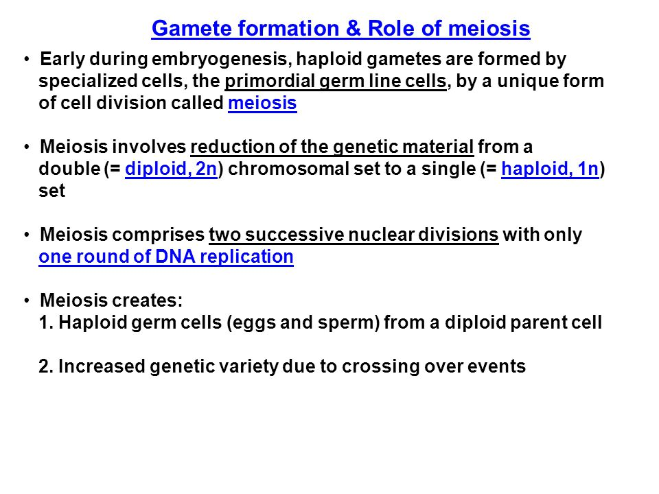 Gamete formation & Role of meiosis