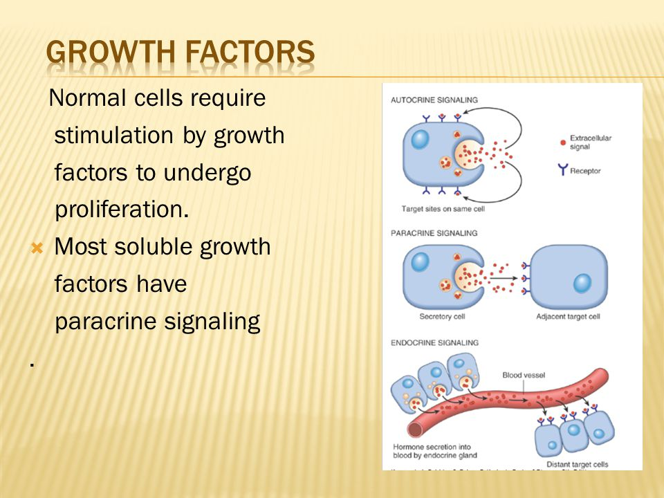 growth factors Normal cells require stimulation by growth
