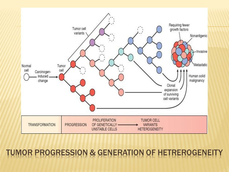 Tumor progression & generation of hetrerogeneity