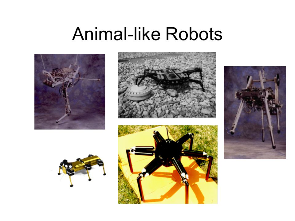 Animal-like Robots
