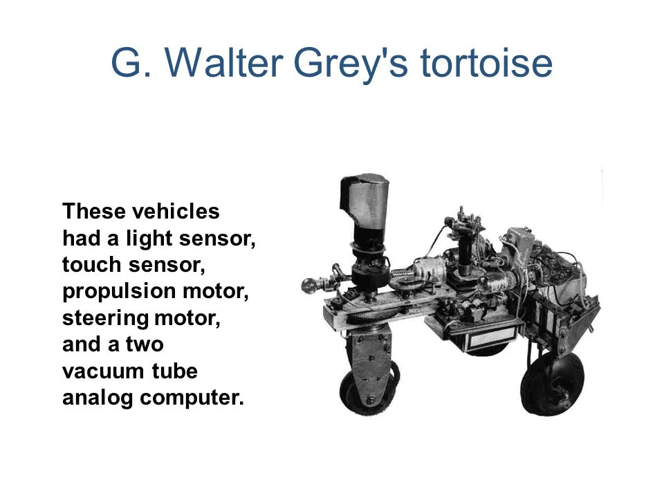 G. Walter Grey s tortoise