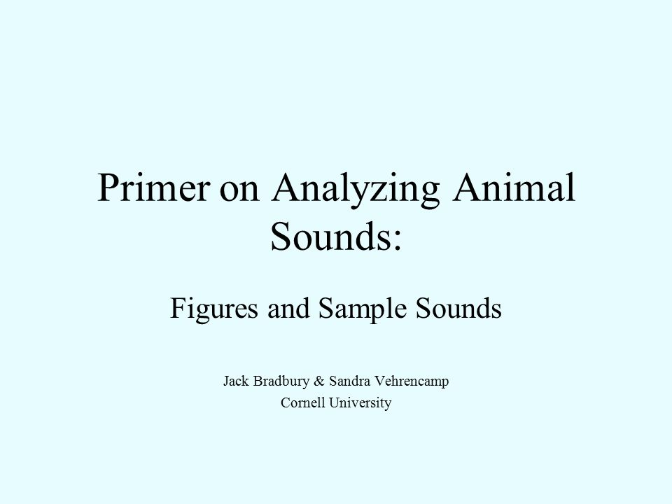 Primer on Analyzing Animal Sounds:
