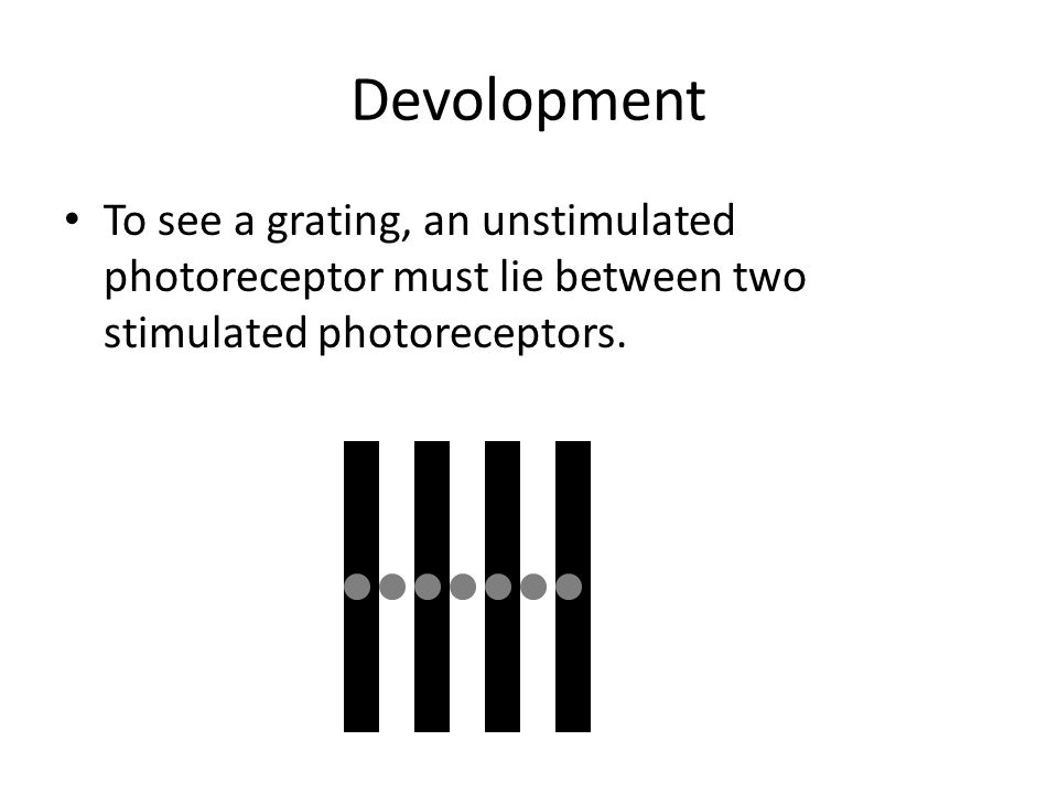 Devolopment To see a grating, an unstimulated photoreceptor must lie between two stimulated photoreceptors.
