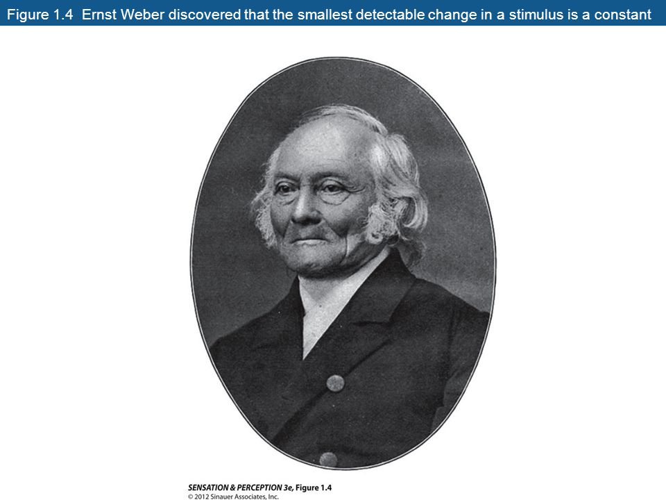 Figure 1.4 Ernst Weber discovered that the smallest detectable change in a stimulus is a constant