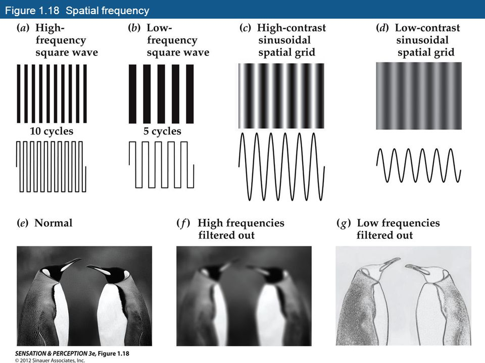 Figure 1.18 Spatial frequency