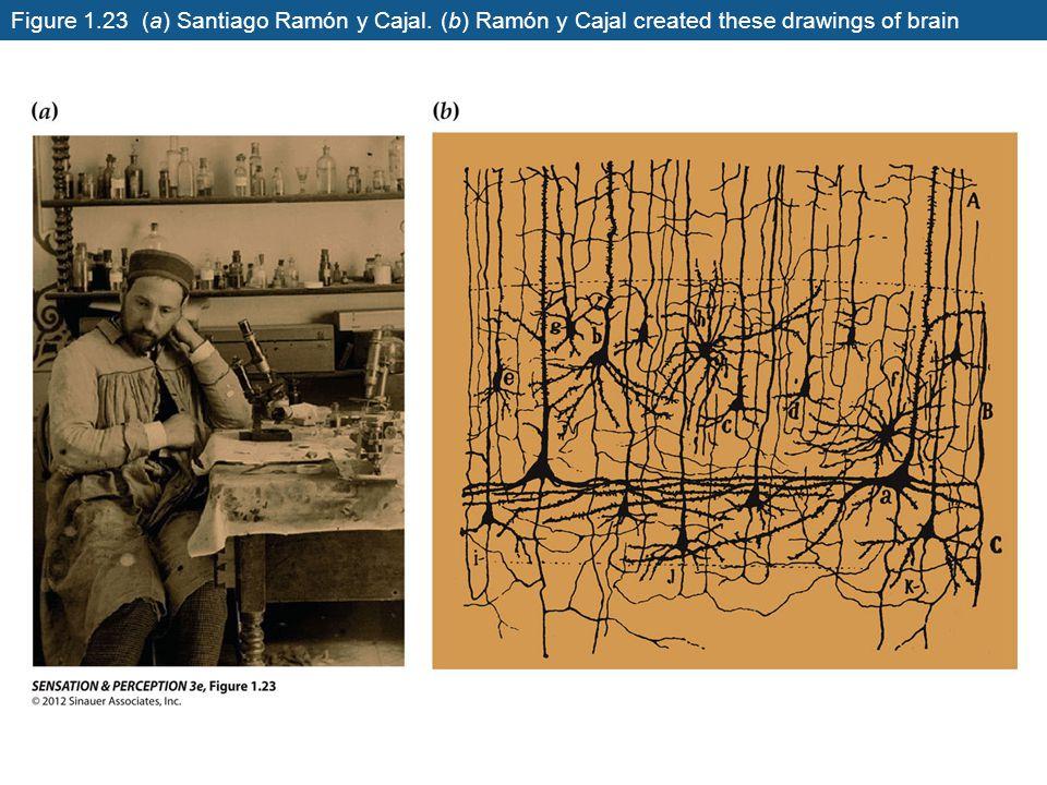 Figure 1. 23 (a) Santiago Ramón y Cajal
