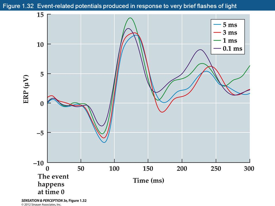 Figure 1.32 Event-related potentials produced in response to very brief flashes of light