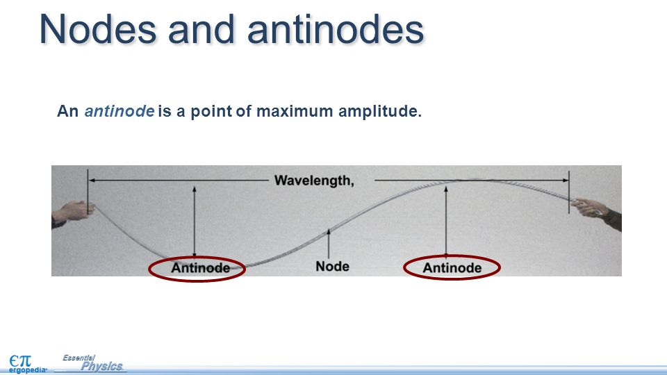 Nodes and antinodes An antinode is a point of maximum amplitude.