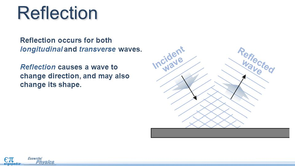 Reflection Reflection occurs for both longitudinal and transverse waves. Reflection causes a wave to.