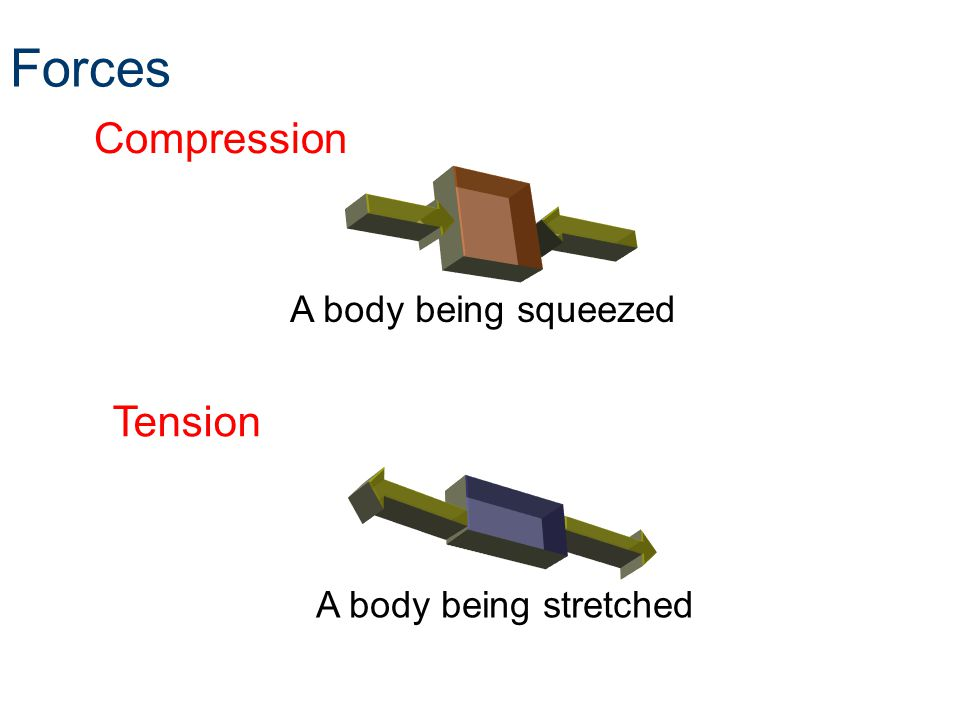 Forces Compression Tension A body being squeezed