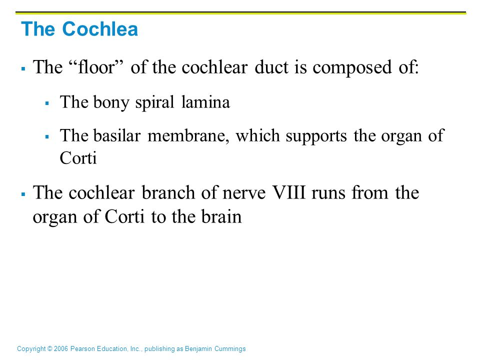 The floor of the cochlear duct is composed of: