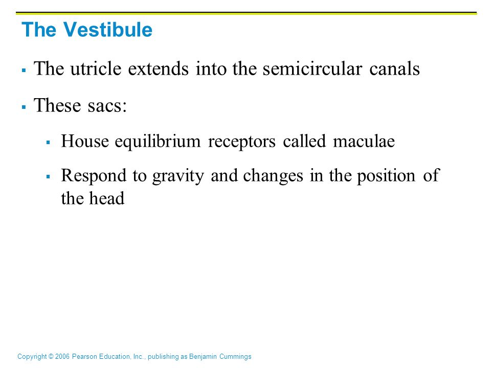 The utricle extends into the semicircular canals These sacs: