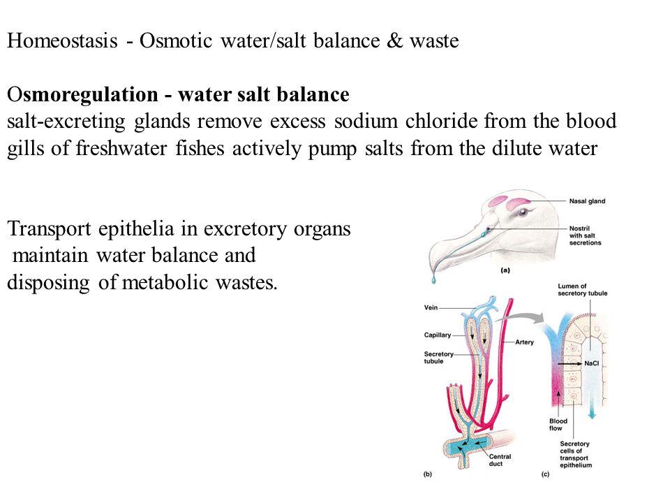 Homeostasis - Osmotic water/salt balance & waste