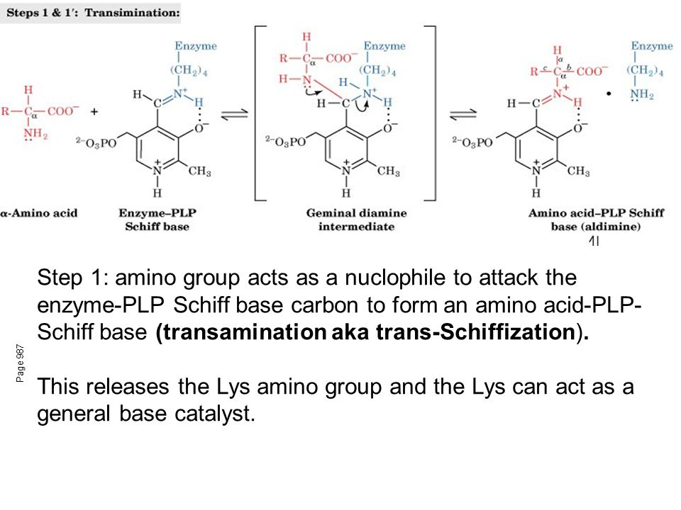 Step 1: amino group acts as a nuclophile to attack the enzyme-PLP Schiff base carbon to form an amino acid-PLP-Schiff base (transamination aka trans-Schiffization).