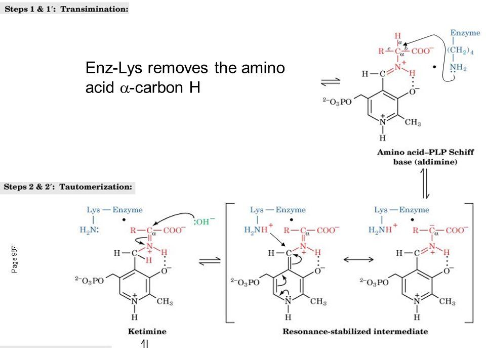 Enz-Lys removes the amino acid -carbon H
