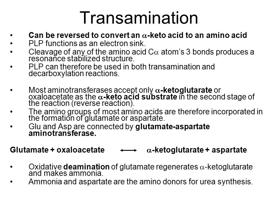 Transamination Can be reversed to convert an -keto acid to an amino acid. PLP functions as an electron sink.