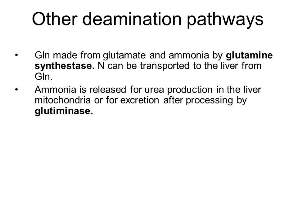 Other deamination pathways