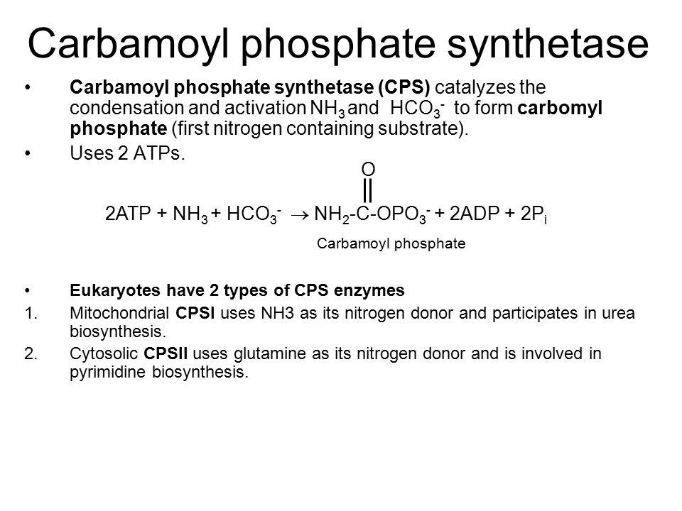 Carbamoyl phosphate synthetase