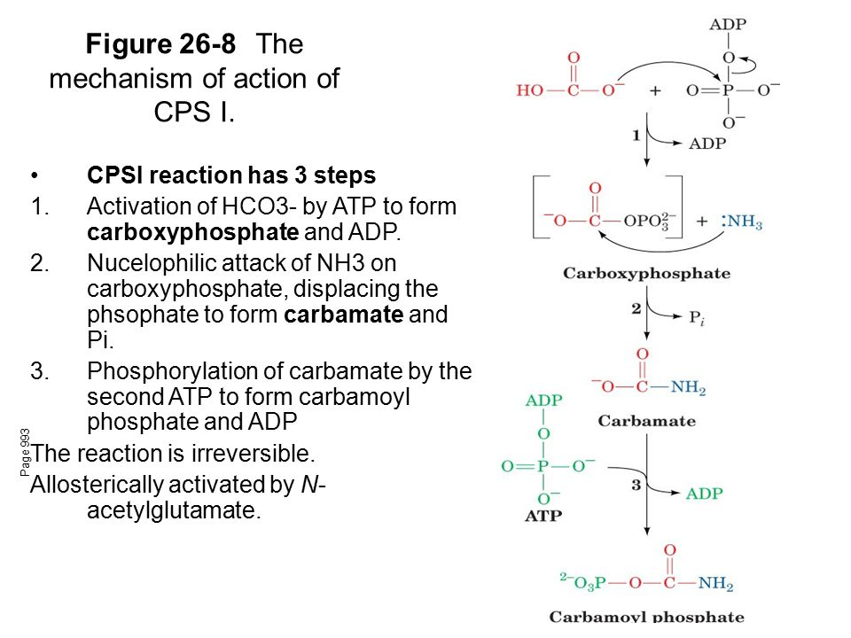 Figure 26-8 The mechanism of action of CPS I.