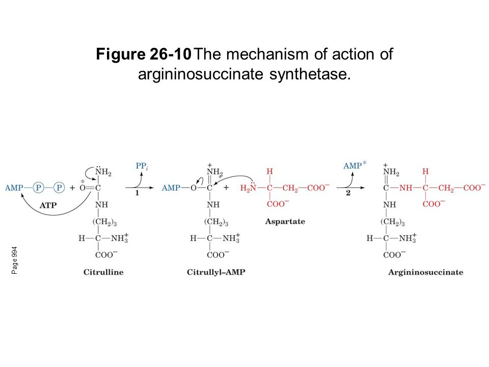 Figure 26-10 The mechanism of action of argininosuccinate synthetase.