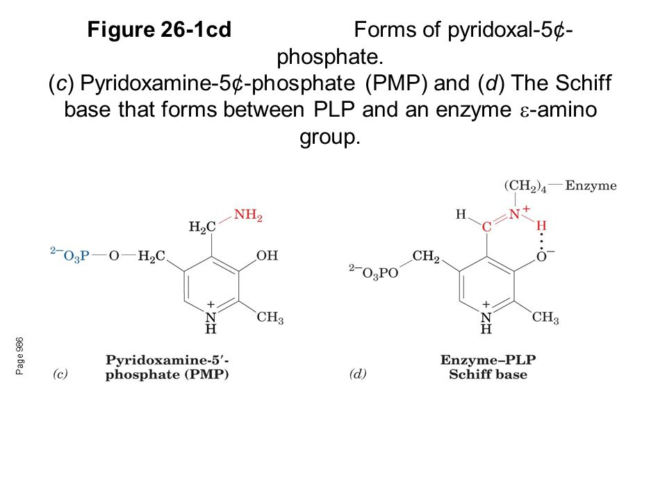 Figure 26-1cd. Forms of pyridoxal-5¢-phosphate