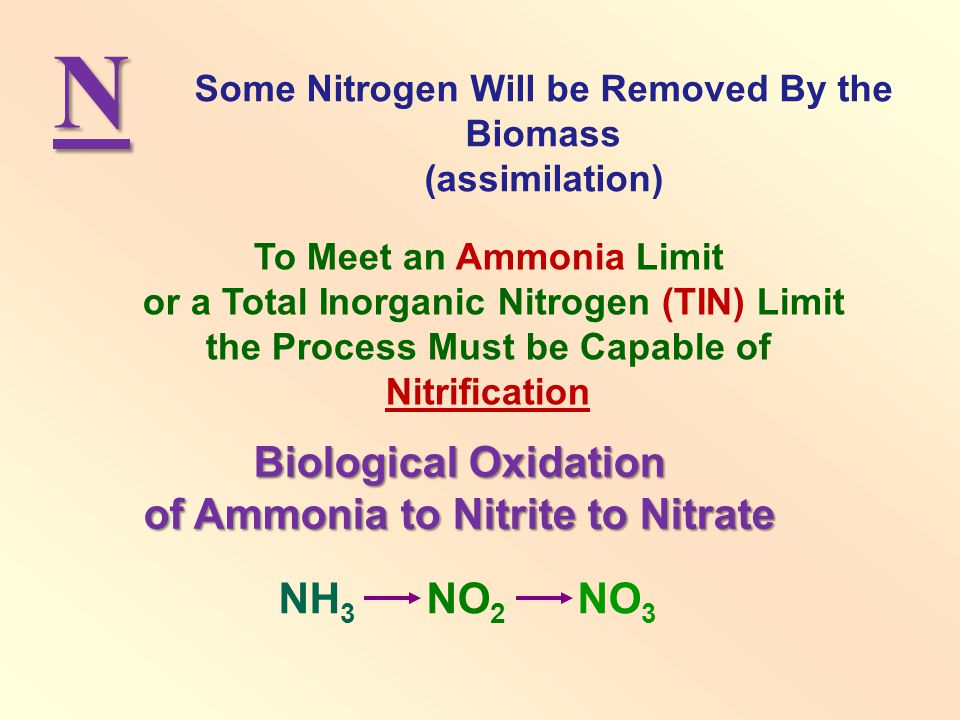 N Biological Oxidation of Ammonia to Nitrite to Nitrate NH3 NO2 NO3