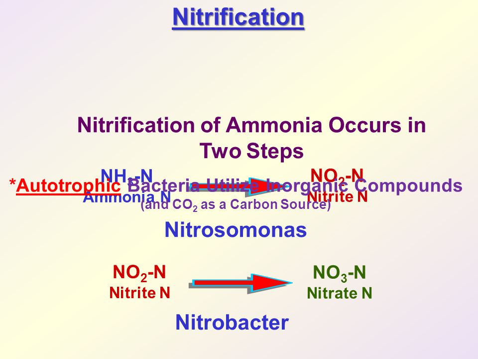 Nitrification Nitrification of Ammonia Occurs in Two Steps