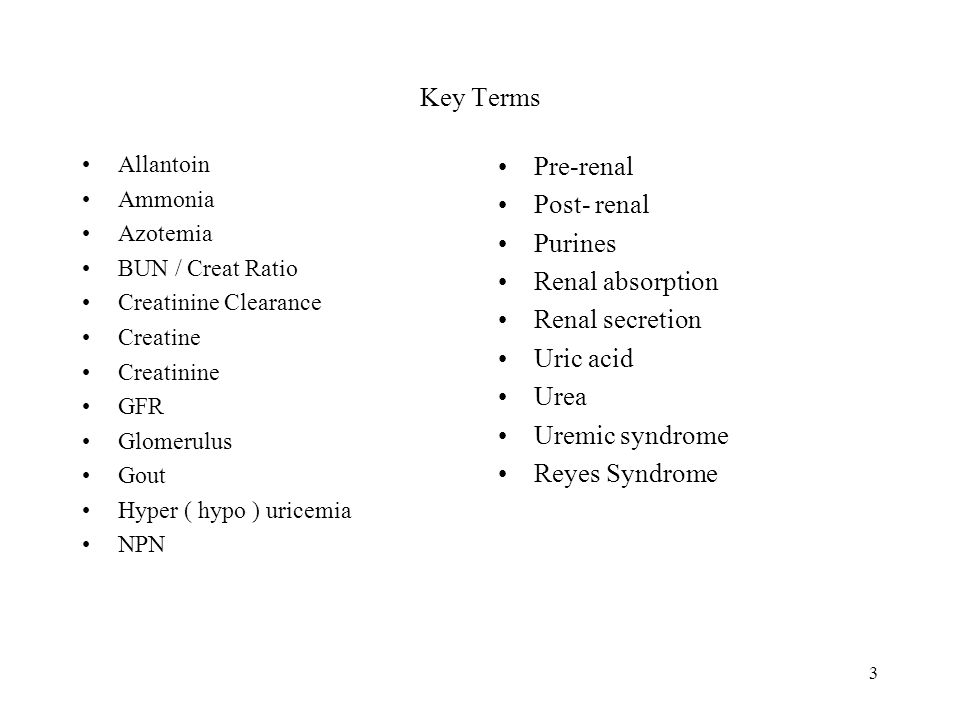 Key Terms Pre-renal Post- renal Purines Renal absorption